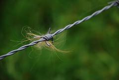 Alexander Boden: Barber Wire?