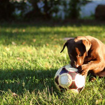 Frauenfußball – wen interessiert's?